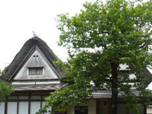 柿右衛門家の母屋と柿の木
